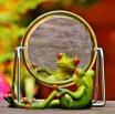 frog-1499162_1280